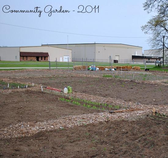 community garden 2011