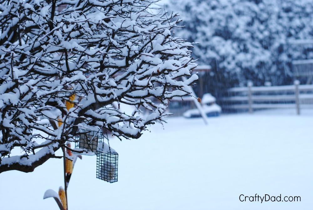 snow on the umbrella tree
